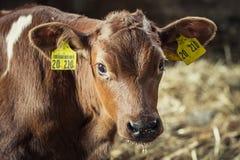Intimorisca con il primo piano delle etichette Fotografie Stock Libere da Diritti