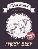 Intimorisca e una passeggiata del vitello lungo la strada Fotografia Stock Libera da Diritti