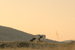 Intimorisca il pascolo nelle colline fuori della città Fotografie Stock