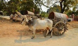 Intimorisca il taxi del trasporto alla pagoda di Mingun a Mandalay immagini stock