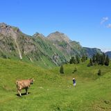 Intimorisca l'esame della viandante nelle alpi svizzere Fotografia Stock