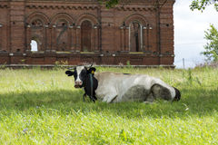 Intimorisca la pelle macchiata c che si trova sull'erba nel prato, dietro Immagini Stock Libere da Diritti
