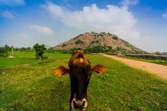 Intimorisca la posa alla fortificazione di Gingee in India del sud immagini stock libere da diritti