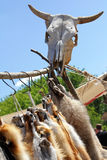 Intimorisca le pelli della volpe e del cranio alla fiera degli artigiani Fotografia Stock Libera da Diritti