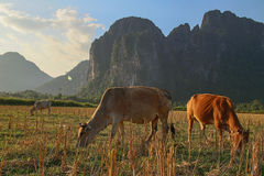 Intimorisce il paradiso al Laos Immagini Stock