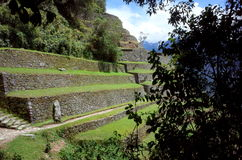 The Intipata ruins on the Inca Trail. The entrance to the Intipata ruins on the Inca Trail hidden behind the jungle Stock Photography