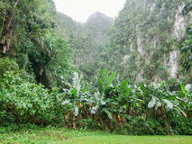 Intorno alla valle di Vinales in Cuba Immagine Stock Libera da Diritti