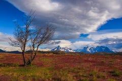 Intorno a Patagonia cilena Fotografie Stock