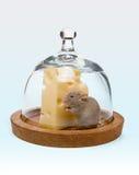Intrappolato con formaggio Immagine Stock Libera da Diritti