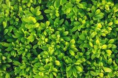 Intressant bakgrund av ljust - gräsplansidor i vår med härligt ljus Begreppet av ekologi Arkivbilder