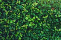 Intressant bakgrund av ljust - gräsplansidor i vår med härligt ljus Begreppet av ekologi Royaltyfria Foton