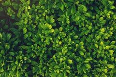 Intressant bakgrund av ljust - gräsplansidor i vår med härligt ljus Begreppet av ekologi Arkivfoto