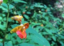 Intressant blomma Fotografering för Bildbyråer