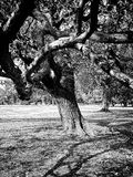 Intressant invecklat almträd Arkivbilder