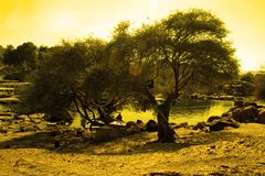 intressant lightingtree royaltyfri foto