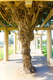Intressant tropisk Tree Arkivbild