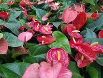 Intressera röda blommor med gröna sidor fotografering för bildbyråer