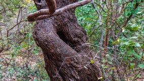 Intressera se trädet i en skog med det stora naturliga hålet arkivbilder