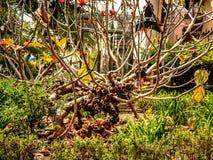 Intressera skottet av ett gammalt dingla träd arkivfoton