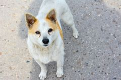 Intresserad blick av ett hemlöst hundanseende på vägen royaltyfri foto