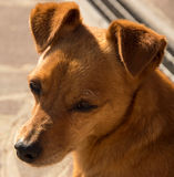 intresserad hund arkivfoton
