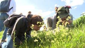 Intresserade folkturister som ser växter i äng Kunskap av naturen arkivfilmer