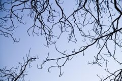 intricacy on tree branches Stock Images