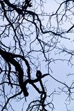 intricacy on tree branches Royalty Free Stock Photo