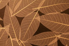 Intricate detail of rice paper wallpaper Royalty Free Stock Images
