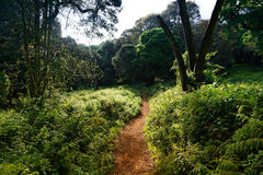 Intricate paths in tropical vegetation Stock Images