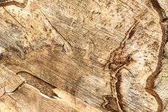 Intricate patterns in a felled tree stock image