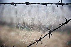 Intricate Spider Web in Morning Dew Stock Image