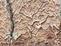 Intricate tree bark. Intricate puzzle shaped tree bark of a Ponderosa Pine royalty free stock photos