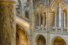 Intérieur de musée d'histoire naturelle, Londres Image stock