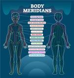 Intrig för illustration för vektor för kroppmeridiansystem, kinesiskt diagram för diagram för energiakupunkturterapi royaltyfri illustrationer