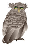 Intrigued old owl. A intrigued owl viewed from behind illustration based on a hand drawing Stock Photo