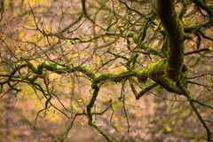 Intriguing autumn branch. This picture was taken in the dutch national park: Hoge Veluwe near Apeldoorn. This branch intrigued me because of its shape and the Stock Image