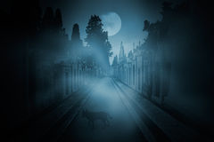 Intriguing cemetery dog. Old european cemetery in a foggy full moon night with an intriguing dog in the background Stock Image