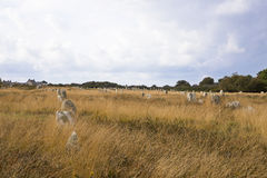Intriguing standing stones at Carnac in Brittany, north-western France Royalty Free Stock Images