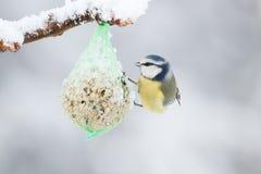 Introducir los pájaros Imagen de archivo