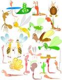 Introduit des erreurs pour tests le ver de terre de coléoptères d'insecte Images libres de droits