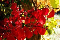 Intryck av en röd nedgång Royaltyfria Foton