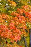 Intryck av sidor och höstfärger Royaltyfri Fotografi