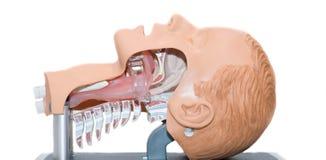 Intubatie van een onbewuste patiënt Royalty-vrije Stock Foto