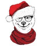 Inu Акиты в шляпе Санта Клауса бежит предпосылка ` s Нового Года также вектор иллюстрации притяжки corel Стоковые Изображения