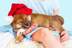 Inu lindo de Shiba de la raza del perrito Fotografía de archivo