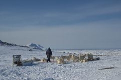 Inuit with sleddogs Stock Photos