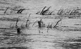 A inundação fotografia de stock