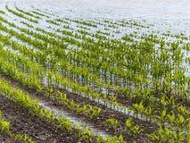 Inundação 2013 Fotografia de Stock