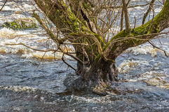 Inundação da mola Foto de Stock